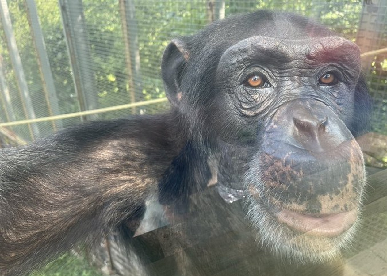 BREAKING: Appeals Court Sides With PETA in Chimp Case… Fight Heading to Supreme Court