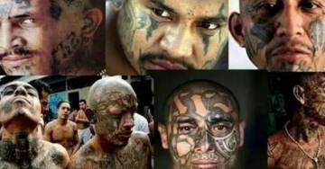 White House Releases Statement on 'The Violent Animals of MS-13'