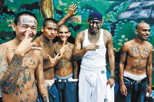 photo image Can't Make This Up! Far Left Website Vox.com Defends MS-13 Animals in Latest Video