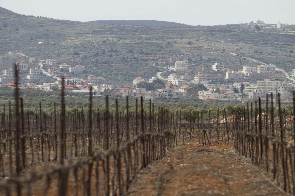 West_Bank_Vineyard_PHOTO