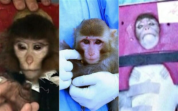 iran fake monkey