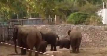 Heart-Wrenching>>> Elephants at Tel Aviv Zoo Swarm, Shield Babies as Bomb Sirens Erupt in City (Video)