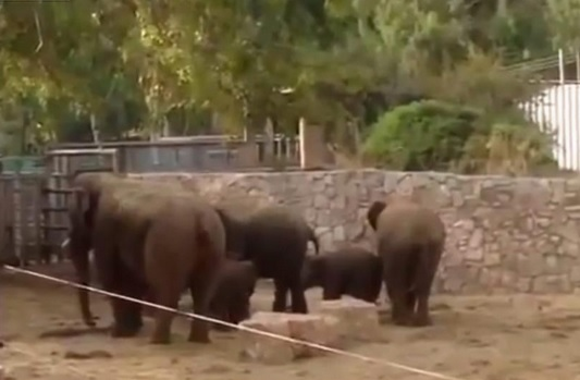 elephants swarm zoo