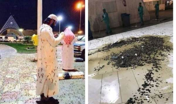 photo image Divine Message? Mecca's 'Grand Mosque' Plagued by Massive Swarm of Locusts (VIDEOS)