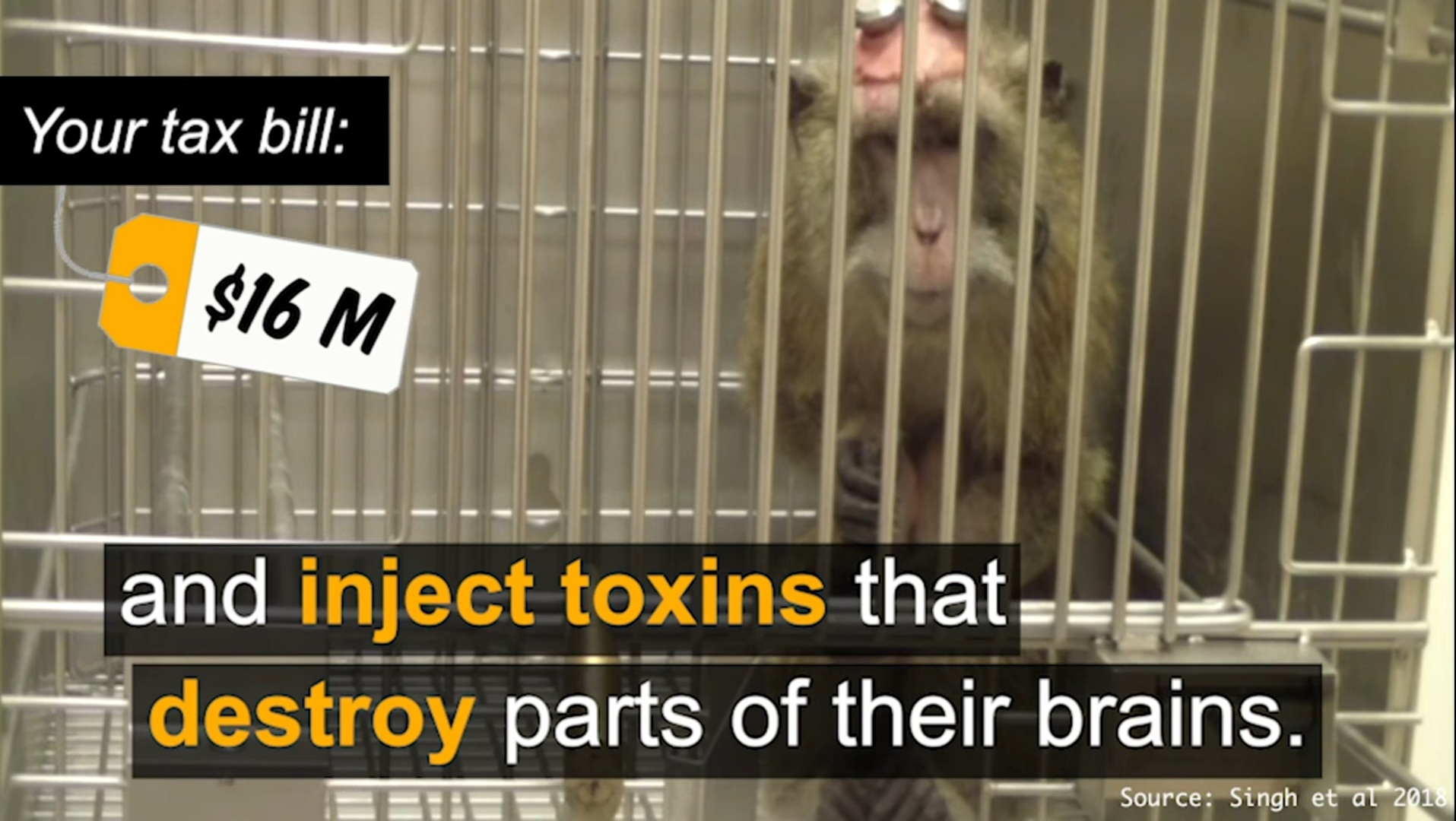 """Fauci's House of Horrors: NIH Spent 16+ Million in Taxpayer Funds on Disturbing 'Toxic Brain Injection' Experiments on Monkeys; """"Drilled Holes in Their Skulls and Implanted Devices into the Brain"""""""
