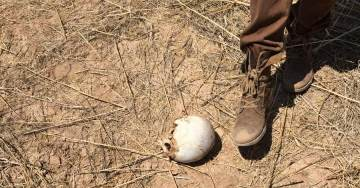 US Veterans Find Child's Body, Skull, Bones Scattered near Alleged Arizona 'Child Trafficking Camp'