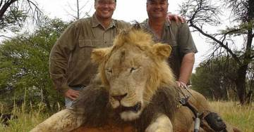 """Enough Is Enough… Obama Administration Will Investigate """"Cecil the Lion"""""""