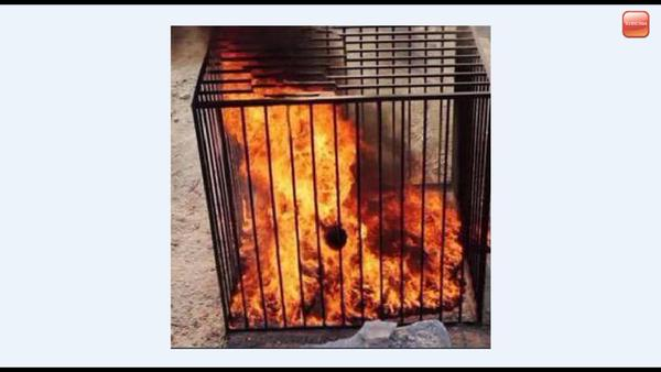 isis cage