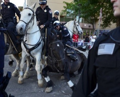 police horse knocked down