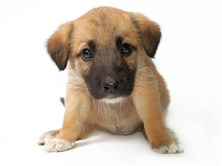 puppy_pic_050415