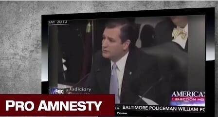 ted amnesty