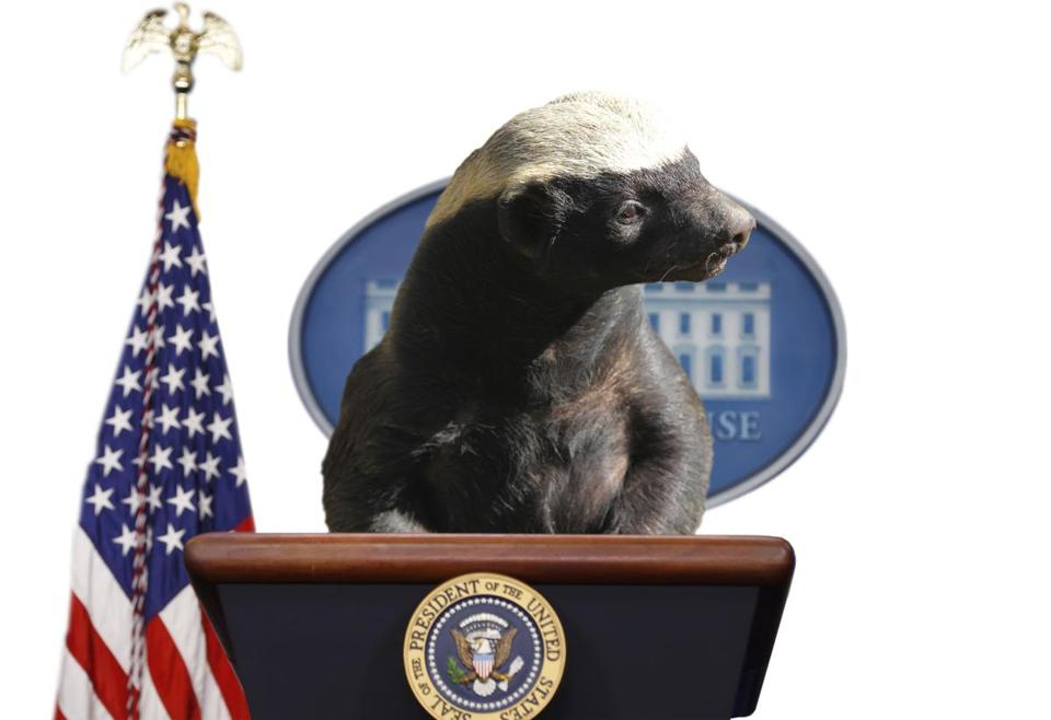 trump honey badger